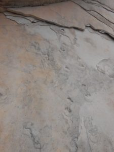 Fossilized critter prints.